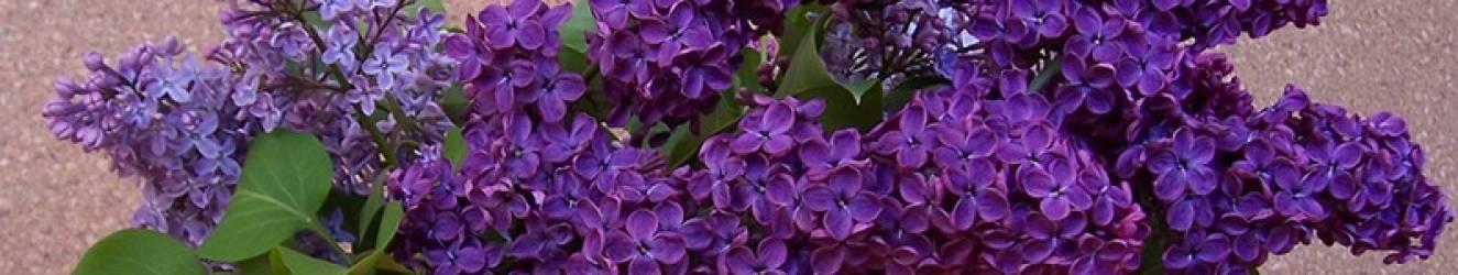 Húsvét 6. vasárnapja,  az Édesanyák ünnepe  2018. május 6.